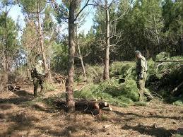 La ministra Tejerina presentará el próximo lunes en Plasencia el Plan de Actuación del Sector Forestal