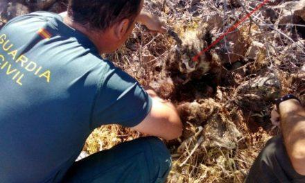La Guardia Civil investiga a un vecino de Puebla de Alcocer por un presunto delito contra la fauna