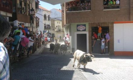 Moraleja convoca una reunión para los caballistas que quieran participar en el traslado de los bueyes
