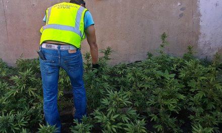 La Guardia Civil desmantela un punto de venta de drogas en Santa Amalia y detienen a su dueño