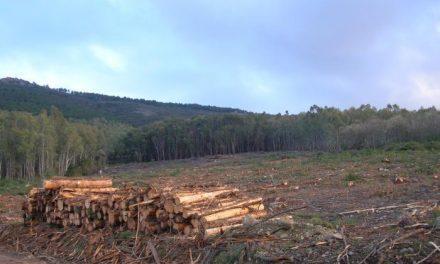 El alcalde de Moraleja valora positivamente la implantación de una planta de pellet en Sierra de Gata