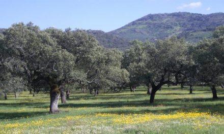 El Consejo de Gobierno acuerda destinar 8 millones de euros a terrenos adehesados privados