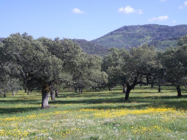 La Junta acuerda destinar 8 millones de euros a la regeneración de terrenos adehesados privados