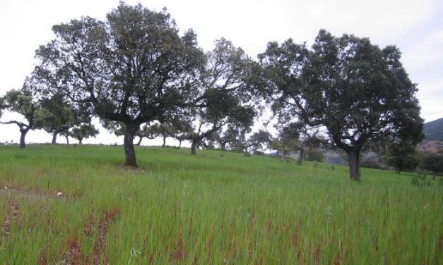 UPA reivindica el papel de agricultores y ganaderos para reducir los efectos negativos del cambio climático