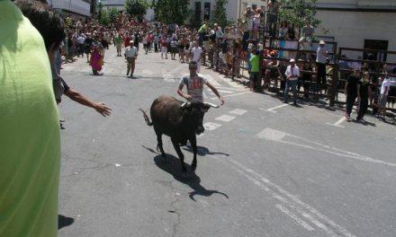 Las Fiestas de San Juan de Coria abren el programa taurino con el encierro de capeones y una vaquilla