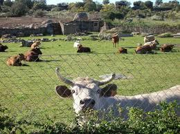 Los ganaderos afectados por la sequía optarán a las ayudas de 28 millones de euros para la mejora de explotaciones