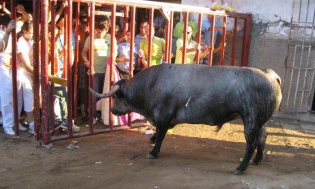 Caobo, el astado de la ganadería de Partido de Resina, defrauda en la tarde de San Juan en Coria