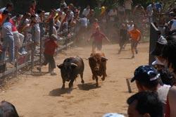 Moraleja acogerá cinco grandes espectáculos taurinos en las tardes de San Buenaventura