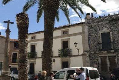 """El consistorio de Coria lleva a cabo trabajos preventivos para evitar que el """"picudo rojo"""" afecte a las palmeras"""