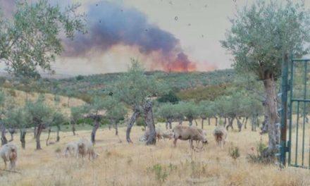 El incendio que afectó en junio a Calzadilla es el más grande registrado este verano en la región