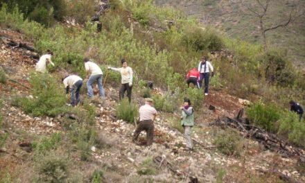 La alquería hurdana de Cambrón acogerá este domingo una jornada de plantación de árboles