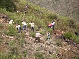 La campaña «100 días de reforest-acción» continuará trabajando hasta el día 31 en la Sierra de Gata