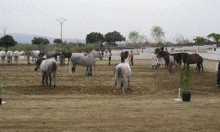 Fregenal de la Sierra celebrará el próximo 19 de septiembre unas Jornadas sobre toros y caballos