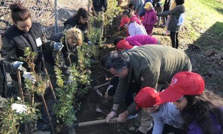 Unos 400 alumnos de Coria plantarán 1.000 árboles en la zona quemada del Parque de Cadenetas