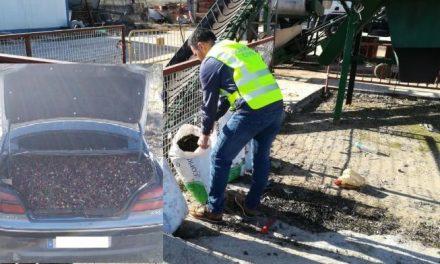 Investigan a nueve personas por el hurto de 8 toneladas de aceituna en explotaciones de Cáceres