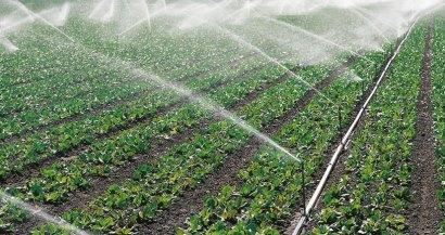 Confederación Hidrográfica del Tajo plantea restricciones de riego en el Alagón y el Árrago de hasta el 65%