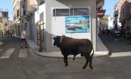 El PP de Moraleja pedirá que la lidia de las tardes de San Buenaventura vuelva a las nueve de la noche