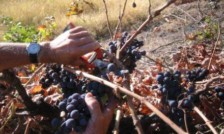 Un Taller de Empleo forma a 45 desempleados de Sierra de Gata en olivicultura, viverismo y fruticultura