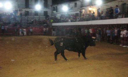 El último toro del aguardiente de las fiestas de Moraleja finaliza sin que se registren heridos