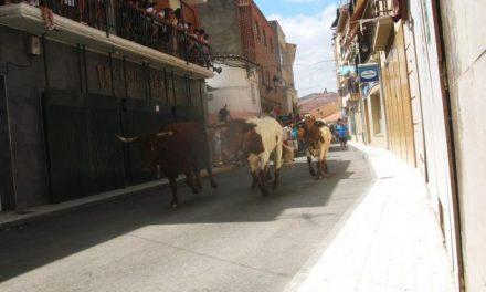 Los astados de Pablo Mayoral y Guadajira efectúan el último encierro de Moraleja en poco más de dos minutos