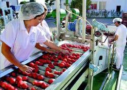 Convocados a la huelga 3.000 trabajadores de las conserveras vegetales, entre los días 28 y 31 de este mes