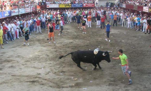 Las Fiestas del Toro de Coria enfrentan a las Nuevas Generaciones del PP con el ayuntamiento cauriense