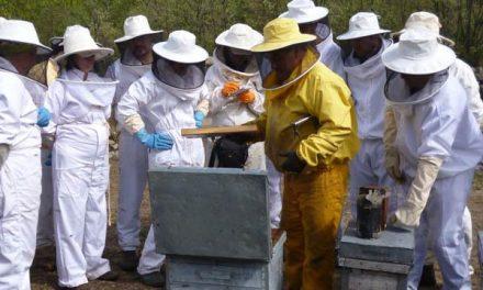 El Centro de Formación Rural de Moraleja es un año más el único que ofrece el Certificado de Apicultura