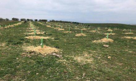 El alcalde de Moraleja acusa al PP de mentir sobre la licitación del secano de la dehesa boyal
