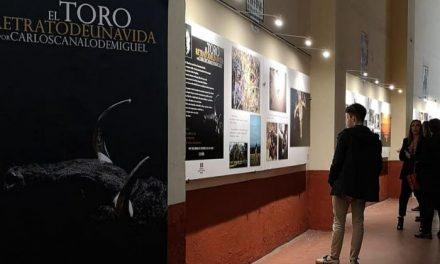 El cauriense Carlos Canalo expone sus fotografías taurinas en la Plaza de Toros de Las Ventas