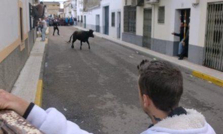 Moraleja celebra el 1 de mayo con vaquillas y prepara la romería de la Virgen de la Vega para este domingo