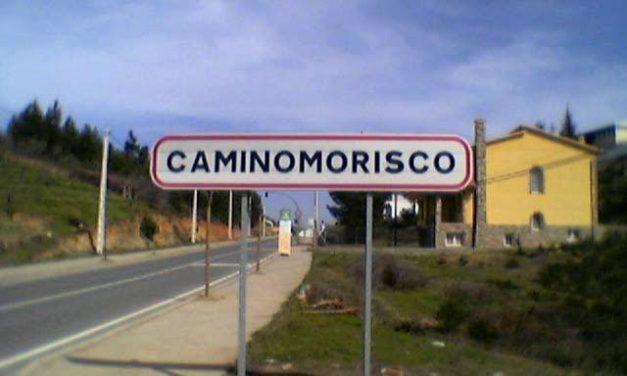 La Junta de Extremadura autoriza la resinación de más de 13.000 pinos en Caminomorisco