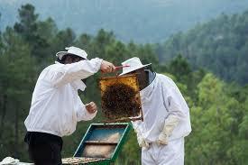 La comarca de Las Hurdes estudia la creación de una Indicación Geográfica Protegida para su miel
