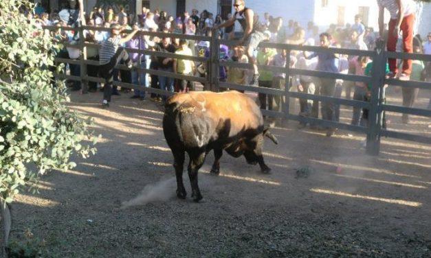 Vegaviana comenzará los festejos taurinos este domingo con motivo de las fiestas de la localidad