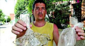 El barrio de Las Moreras de Badajoz pide que se actúe con urgencia contra una plaga de gusanos