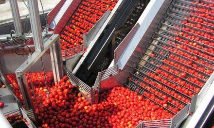 Una huelga amenaza con paralizar la actividad de las industrias tomateras y de la aceituna de aderezo