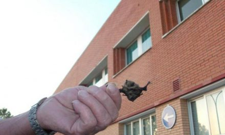 Adenex ve incorrectos los medios adoptados por el hospital de Coria contra los murciélagos localizados