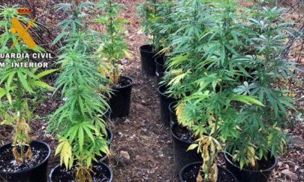 Detenido un vecino de Moraleja de 30 años por cultivar marihuana en Vegaviana