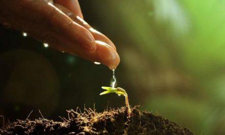 Un proyecto del Cicytex propone la utilización del compost procedente de residuos como abono
