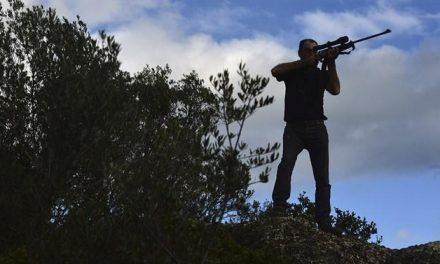 Los cazadores extremeños podrán abatir un máximo de 10 tórtolas durante la media veda