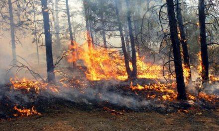 La comarca cacereña de Sierra de Gata sufre 19 incendios en los últimos ocho días