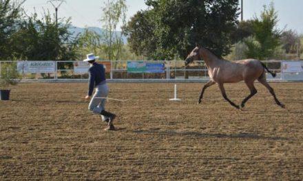 El Salón del Caballo de Torrejoncillo acogerá el II Concurso de Equitación de Trabajo de Extremadura