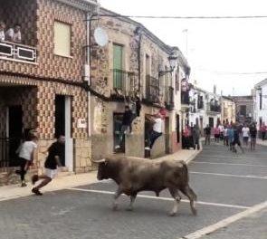 Un varón de Moraleja resulta herido con pronóstico grave durante la lidia del toro en Calzadilla