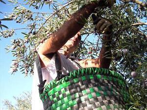 El sector olivarero se manifiesta este jueves en Madrid ante la crisis de precios y los aranceles