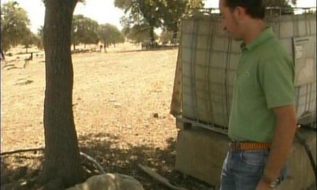 Buitres del Parque Nacional de Monfragüe, a falta de carroña, buscan ovejas vivas en Trujillo