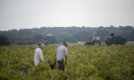 Asaja aplicará el Estatuto de los Trabajadores si no hay acuerdo antes de final de año en el convenio del campo