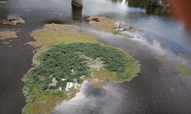 Unidas Podemos Coria denuncia a CHT el mal estado en el que se encuentra el río Alagón