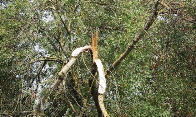 El temporal Gloria causa incidentes sin gravedad en el norte de la provincia de Cáceres