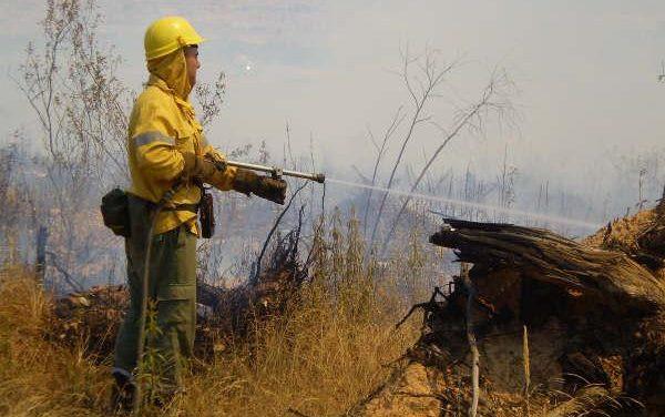Un incendio provocado en la EX-108, entre Moraleja y Zarza, calcina plantones de alcornoques y matorral