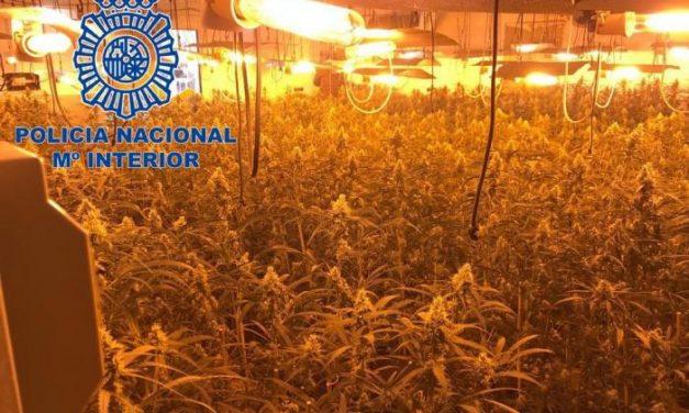 Tres detenidos tras olvidarse las llaves en la puerta de una nave con 620 plantas de marihuana en Plasencia