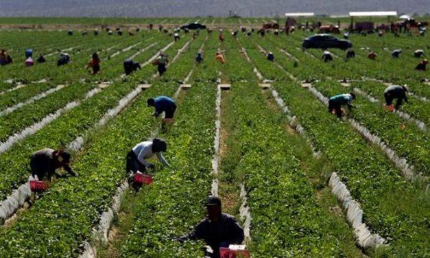 La crisis del Covid-19 genera empleo en otros sectores: la región pide  trabajadores para la campaña agrícola